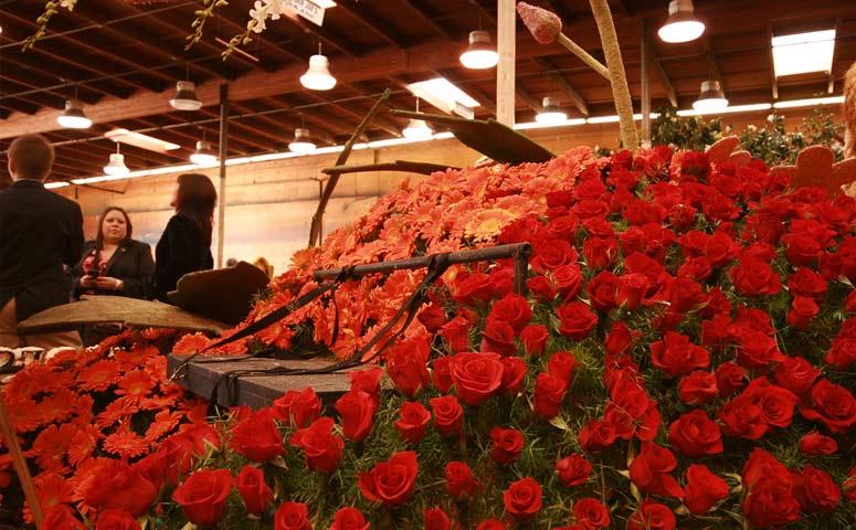 Make Roses Last Longer