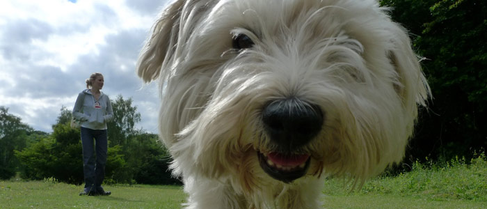 Owner Walking Dog no Leash