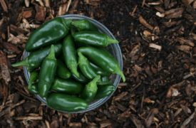 Can You Freeze Jalapenos?
