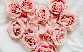 49+ Beautiful Rose Wallpaper for iPhone
