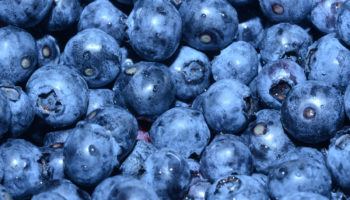 How to Thaw Blueberries Properly & Quickly
